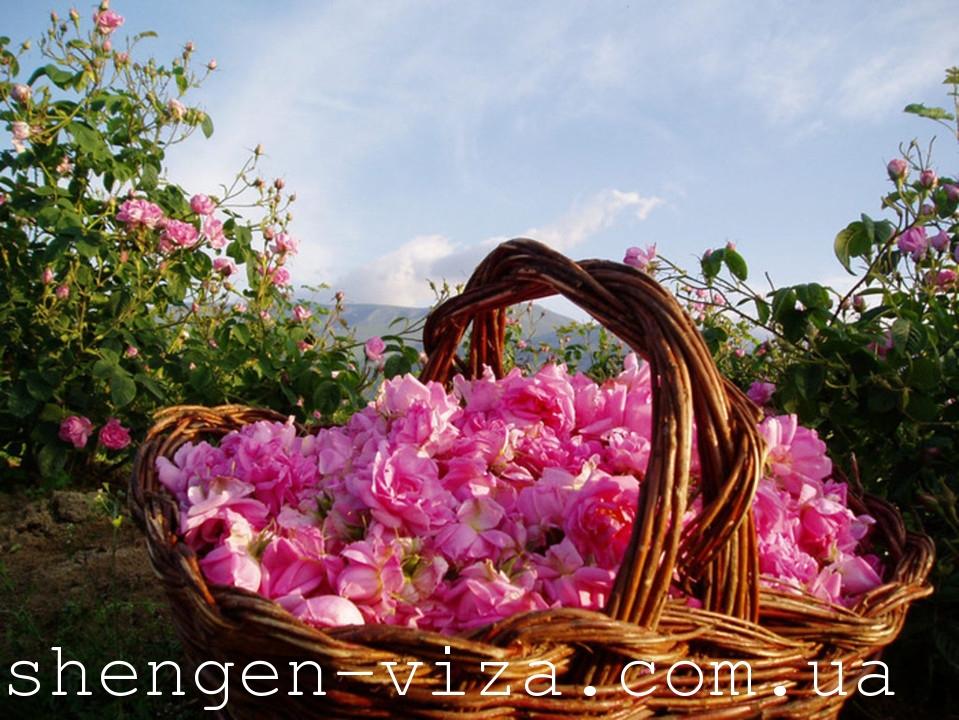 Болгарія: країна троянд, країна мрій і лавандових полів