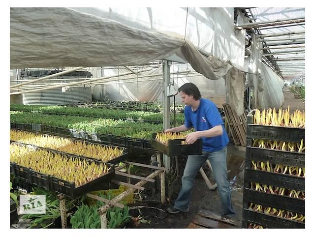 Робота в Польщі з квітами