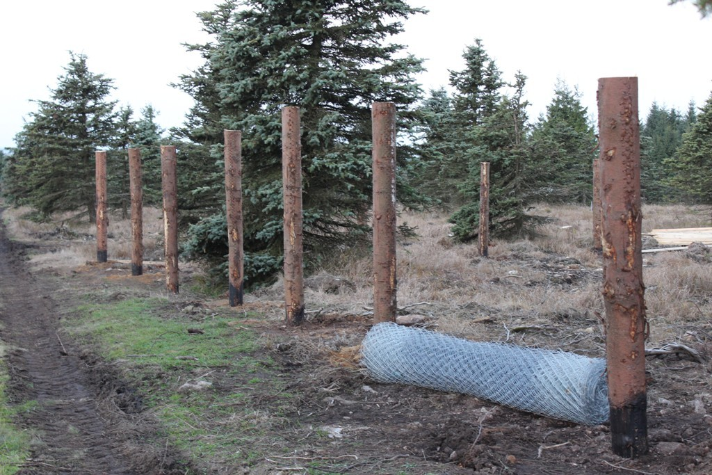 Работа в Чехии для мужчин | Строительство лесного ограждения